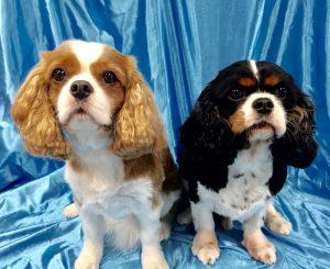 Dog Grooming Service in Wilmington DE