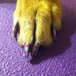 Pet Spa Services in Garnet Valley PA